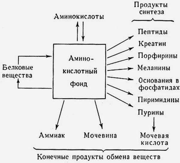 Схема использования аминокислотного фонда