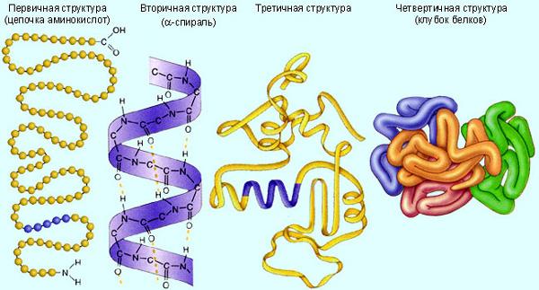 Белки в биохимическом анализе крови