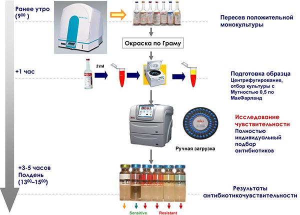 Схема проведения посева на антибиотикочувствительность