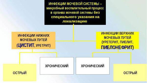 Инфекционные болезни мочевыделительной системы