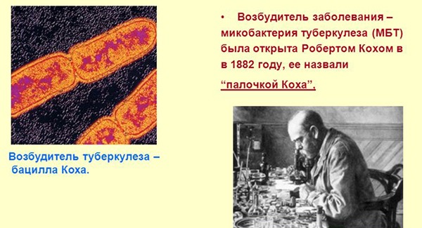 Микробактерия - возбудитель туберкулеза