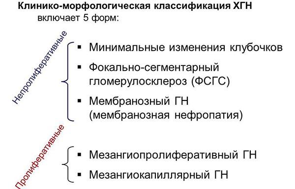 Морфологическая классификация хронической формы гломерулонефрита