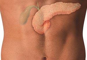 Поджелудочная железа и желчный пузырь - расположение