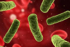 Энтеробактерии
