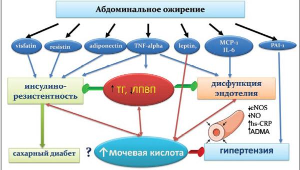 Ожирение как фактор повышения мочевой кислоты в крови