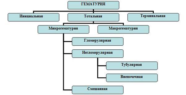 Гематурия типы