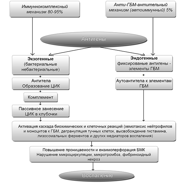 Схема патогенеза гломерулонефрита