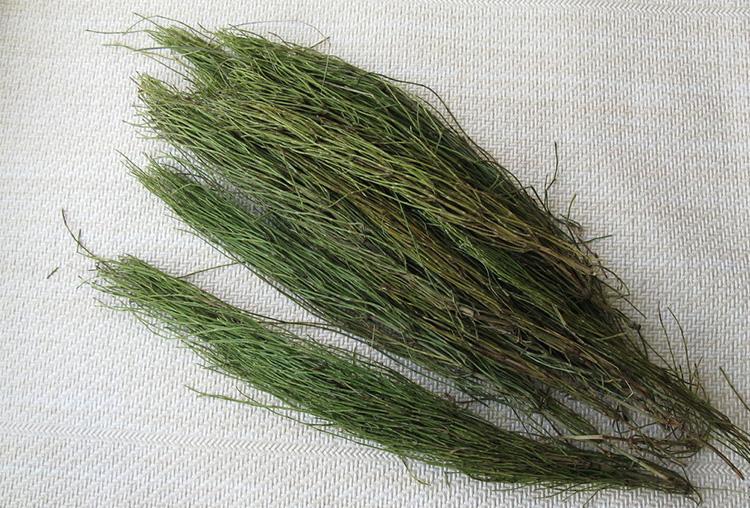 Трава хвоща